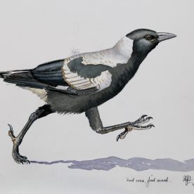 rw-baby-magpie-1