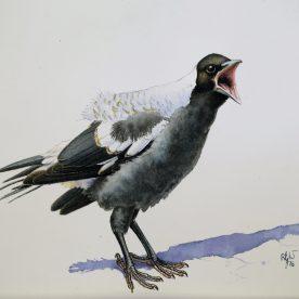 rw-baby-magpie-4