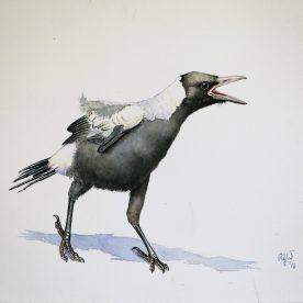 rw-baby-magpie-6