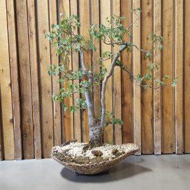 Lance Nutt English Elm -handmade pot