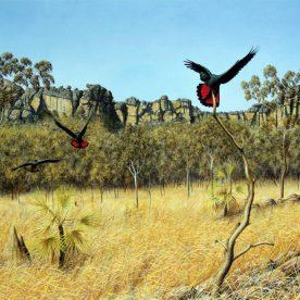 Richard Weatherly Kakadu Escarpment Giclee' Framed Edition of 250 460 x 570mm $600