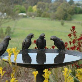 Lorikeet Birdbath (2)
