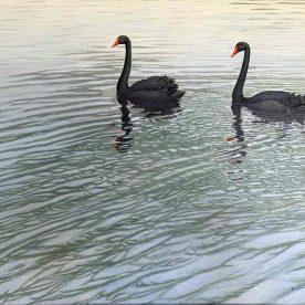 Richard Weatherly Black Swans Oil on linen 40 x 50cm Framed $4,750 SOLD