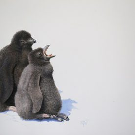 Richard Weatherly Adelie Penguin Chicks Optimism and Pessimism Gouache on paper 21 x 30cm Framed $1,400 p222 SOLD