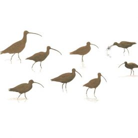 Richard Weatherly Eastern Curlew Silhouettes Gouache 21 x 30cm Framed $1,200 p266-267