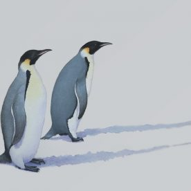 Richard Weatherly Emperor Penguin Mawson Station Watercolour on paper 21 x 30cm $1,200 p216