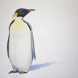 Richard Weatherly Emperor Penguin Pen & Ink Wash on paper 21 x 30cm Framed $1,350 p221