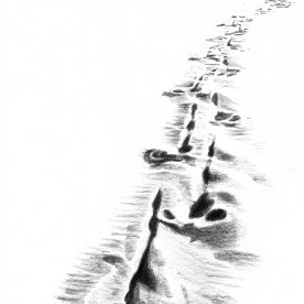 Richard Weatherly Emu Tracks Pencil on paper 21 x 30cm $400 p67