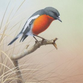 Richard Weatherly Flame Robin Gouache on paper 21 x 17cm NFS on loan from private collector