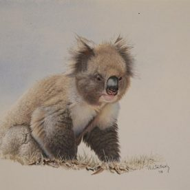 Richard Weatherly Koala Gouache on paper 21 x 29cm NFS on loan from private collector