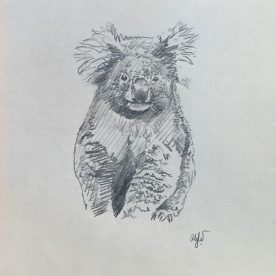 Richard Weatherly Koala at Tower Hill Pencil on paper 25 x 20cm Framed $400 SOLD