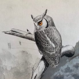 Richard Weatherly White-faced Scops Owl Chippy pen & Ink with wash 24 x 18cm $950