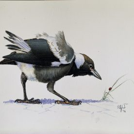 Richard Weatherly Baby Magpie with Ladybird Gouache on paper 21 x 30cm p83 On loan
