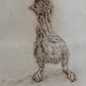 Richard Weatherly Emu Chick Etching AP 15 x 12cm Framed $400 SOLD