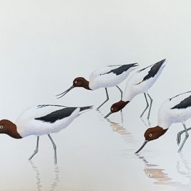 Richard Weatherly Red-necked Avocets Gouache on paper 21 x 30cm Framed $1,250 SOLD