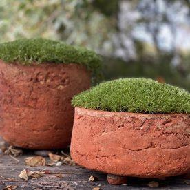 Pattie Beerens Laurel and Hardy Local cliff clays & Scleranthus biflorus native plants $350 each